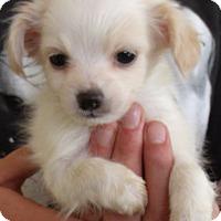 Adopt A Pet :: CASPER - Corona, CA