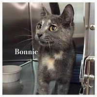 Adopt A Pet :: Bonnie - DFW Metroplex, TX
