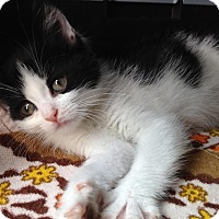 Adopt A Pet :: Messina - East Brunswick, NJ