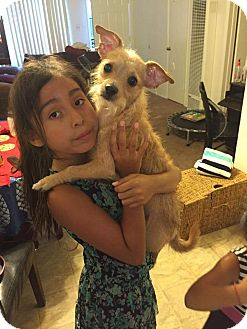 Cairn Terrier Mix Puppy for adoption in Fountain Valley, California - Munchies