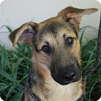 Adopt A Pet :: KENNY - Red Bluff, CA