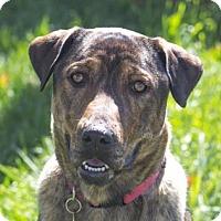 Adopt A Pet :: Harmony - Logan, UT