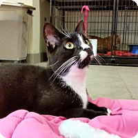 Adopt A Pet :: Slinky - Sewaren, NJ