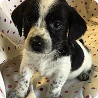 Adopt A Pet :: Gretel - Los Angeles, CA