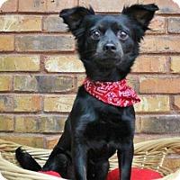 Adopt A Pet :: Mickey - Benbrook, TX