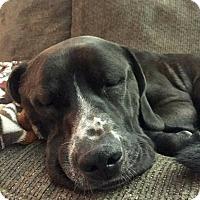 Adopt A Pet :: Clarke - Clarksville, TN