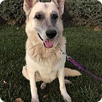 Adopt A Pet :: Chucky - Maryville, MO