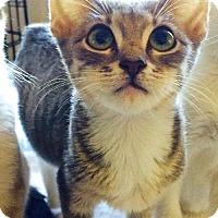 Adopt A Pet :: Stooge - san diego, CA