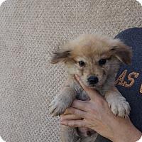 Adopt A Pet :: Garbo - Oviedo, FL
