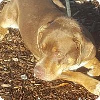 Adopt A Pet :: Thor - Yreka, CA