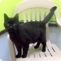 Adopt A Pet :: Abber - Janesville, WI