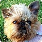 Adopt A Pet :: VOLUNTEERS NEEDED!