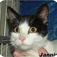 Adopt A Pet :: jannis - Hawk Springs, WY