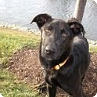 Adopt A Pet :: Janie - Lewisville, IN