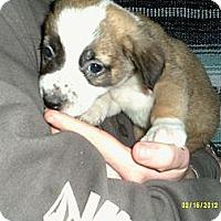 Adopt A Pet :: Kincaid - Dundas, VA