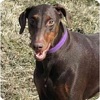Adopt A Pet :: Reese--adopted!! - New Richmond, OH