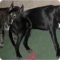 Adopt A Pet :: Emmett - Emory, TX