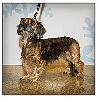 Adopt A Pet :: Rex - Owensboro, KY