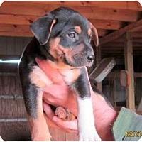 Adopt A Pet :: Tink - Westbrook, CT