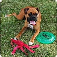 Adopt A Pet :: Bianca - Kansas City, MO
