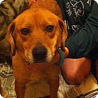 Adopt A Pet :: Lil Miss - McKeesport, PA