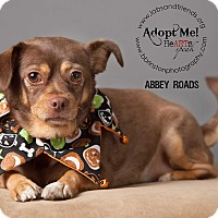 Adopt A Pet :: Abbey Road - Burbank, CA