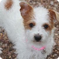 Adopt A Pet :: Pumpkin-found by a firefighter - Norwalk, CT