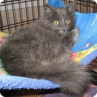 Adopt A Pet :: Foxy Lady - brewerton, NY