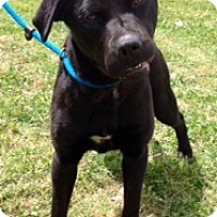 Adopt A Pet :: ONYX - Bedminster, NJ