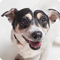 Adopt A Pet :: Precious and Chaz! - Los Angeles, CA