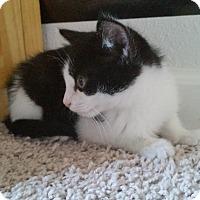 Adopt A Pet :: Cloud - Colorado Springs, CO