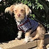 Adopt A Pet :: skittles - Costa Mesa, CA