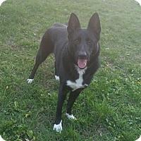 Adopt A Pet :: 1-4 Jasmine - Triadelphia, WV