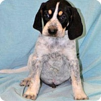 Adopt A Pet :: Edsel in CT - Manchester, CT