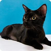 Adopt A Pet :: Benavista - Chandler, AZ