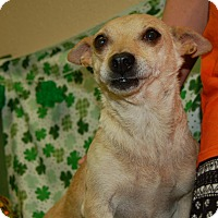 Adopt A Pet :: Legacy - Modesto, CA