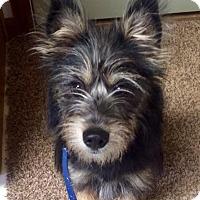 Adopt A Pet :: Cindy Lou - Dayton, OH