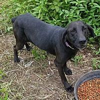 Adopt A Pet :: Etta Mae - Vinemont, AL