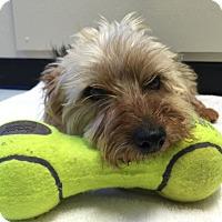 Adopt A Pet :: Max - Lafayette, CA