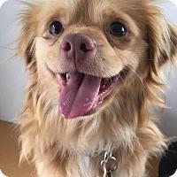 Adopt A Pet :: Khiko - Los Angeles, CA