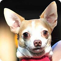 Adopt A Pet :: TT - Vernonia, OR