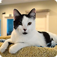 Adopt A Pet :: Lady - St. Charles, MO