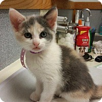 Adopt A Pet :: Jenna - Putnam, CT