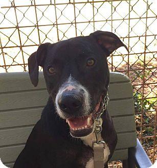 Terrier (Unknown Type, Medium) Mix Dog for adoption in Edwardsville, Illinois - Pepsi