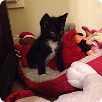 Adopt A Pet :: Missy - ROSENBERG, TX