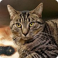Adopt A Pet :: Ivy - Chambersburg, PA