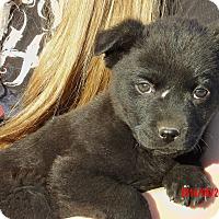 Adopt A Pet :: Midnight (6 lb) Video! - Burlington, VT