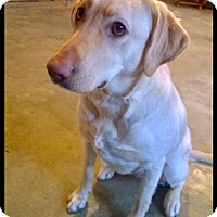 Adopt A Pet :: Maggie- Adoption Pending! - Hillsboro, IL