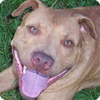 Adopt A Pet :: Noah - Cedar Rapids, IA