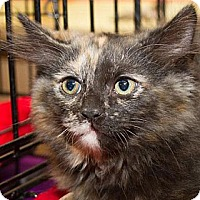 Adopt A Pet :: Princess - Irvine, CA